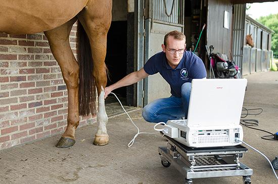 paarden echografie
